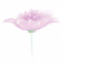 a picture of a flower