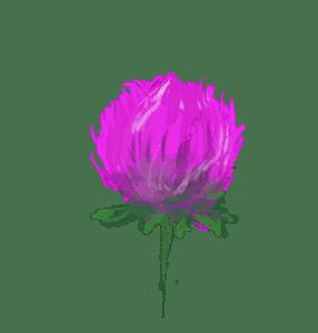 hand-drawn flower photo
